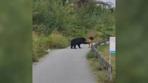Trap in place after frightening black bear encounter on Coquitlam Crunch trail