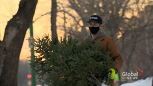 Arborist chipping in donations to Saskatoon Food Bank: 'If you can help you should' (01:46)