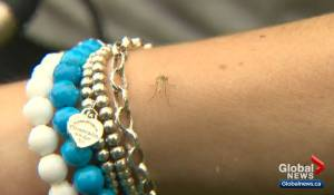 Mosquito season underway in Edmonton and surrounding region