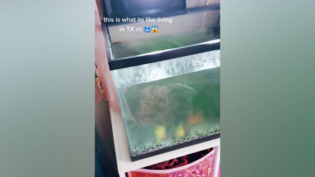 Click to play video 'Woman's fish tank turns into block of ice during Texas storm'