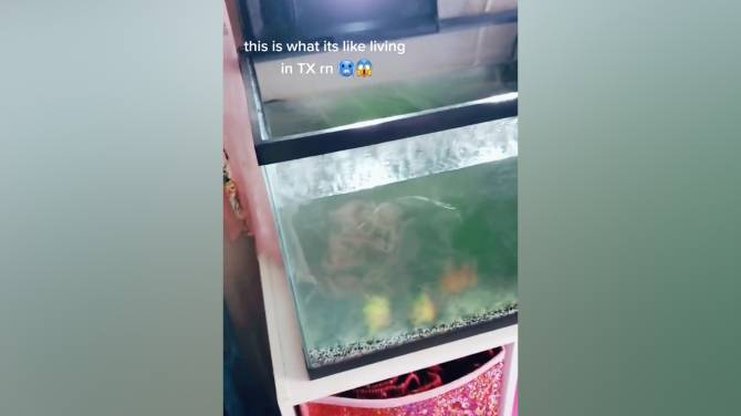 Click to play video: Woman's fish tank turns into block of ice during Texas storm