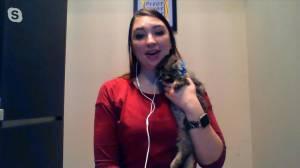 Adopt a Pet: Luigi and Saskatoon SPCA's Christmas Stockings (04:16)