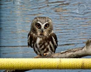 Alberta wildlife behavior could change during COVID-19 outbreak
