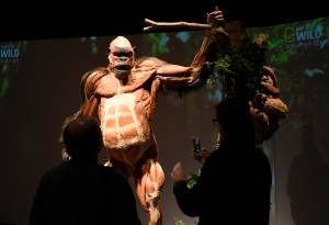 Body Worlds: Animal Inside Out exhibit comes to Calgary