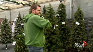 Your Christmas tree may put you at risk: Lethbridge fire department