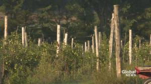 Deux-Montagnes apple producer falls victim to vandals