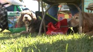 Kingston Humane Society is in this week's Community Spotlight