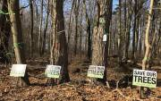 Play video: Fight to save Port Hope's Penryn Woodlot ramps up
