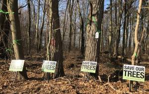 Fight to save Port Hope's Penryn Woodlot ramps up (01:41)