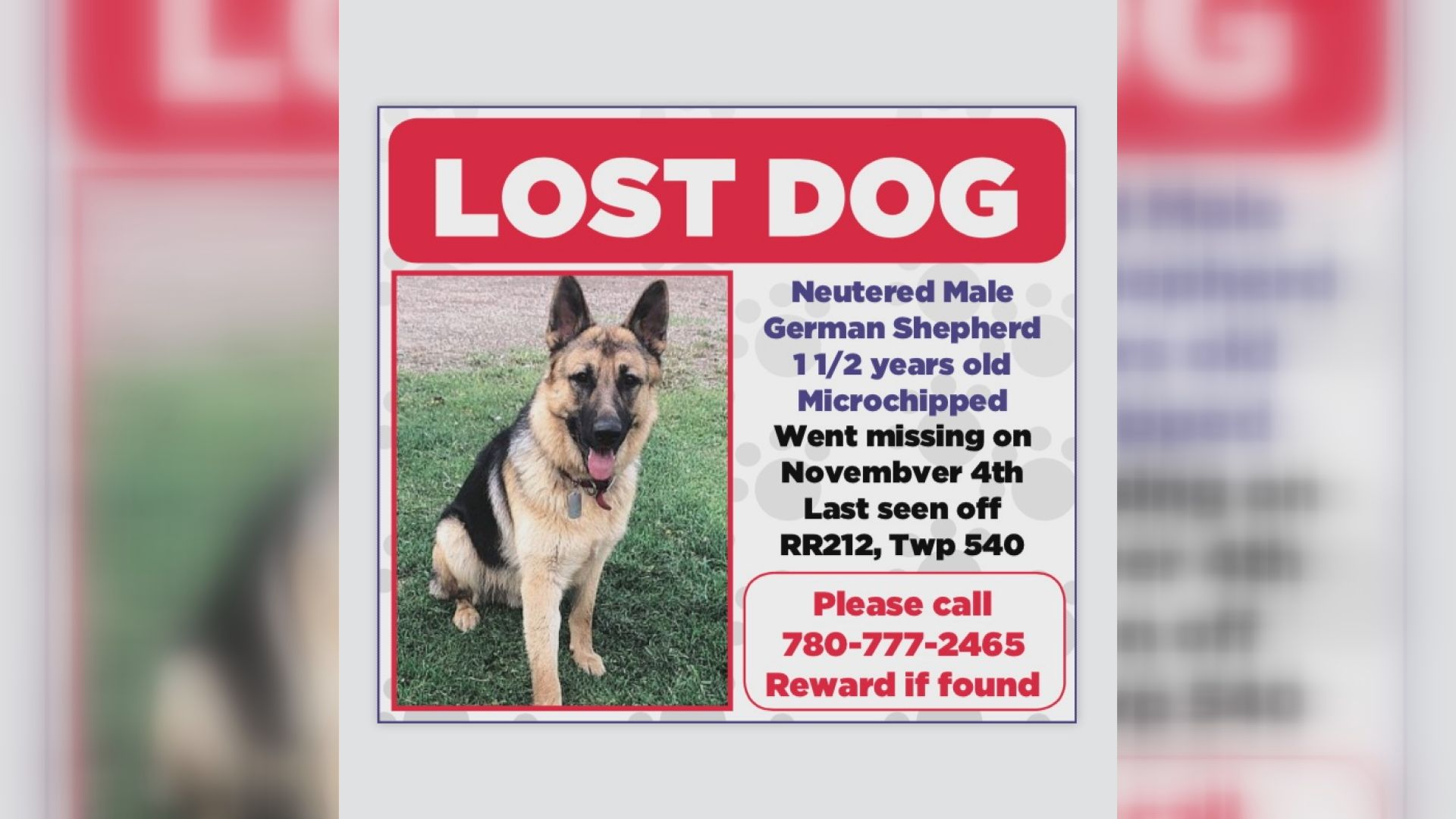 Edmonton couple scammed after posting add for their missing dog