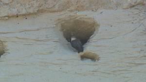 Road construction effecting migratory bird habitat (02:11)