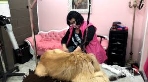 Riverview dog groomer still getting hateful messages online following video posted on social media (02:13)