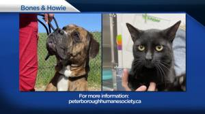 Global Peterborough's Shelter Pet Project for May 28, 2021 (02:11)