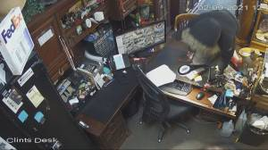 Edmonton antique store targeted in daytime robbery (01:42)
