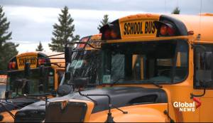 COVID-19 fears, extra training to blame for school bus driver shortage in Edmonton