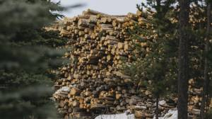 Unions and environmentalists call for suspension of new wood pellet mills (02:17)