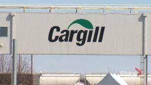 COVID-19: Documents prompt new calls for public inquiry into Cargill outbreak in Alberta (02:05)