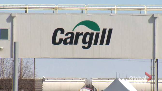 Click to play video: COVID-19: Documents prompt new calls for public inquiry into Cargill outbreak in Alberta