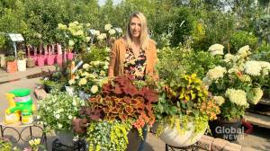 Garden Tips:  Caring for your containers (03:27)