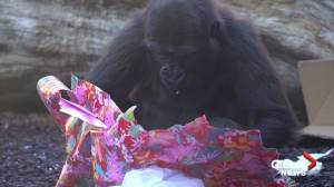 Santa brings gifts to animals at Spanish zoo