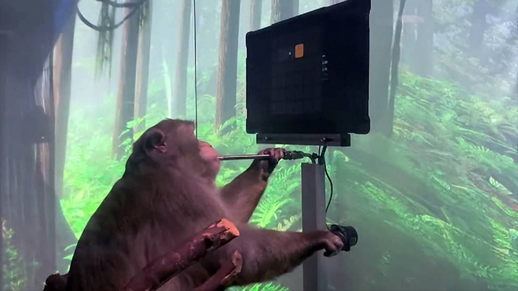 Click to play video: 'Elon Musk's Neuralink shows monkey playing video games via brain chip'