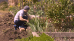 COVID-19 sparks spike in home gardening in B.C.