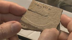 B.C. Dragonfly fossils given scientific names