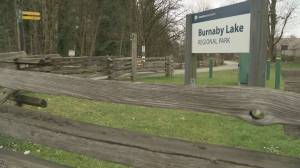 Woman says she was stalked by man on Burnaby Lake Park trail (01:37)