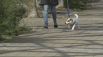 Pet adoption concerns