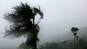 Trees violently thrash around as Hurricane Dorian hits U.S. Virgin Islands
