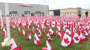 Hundreds of Canadian flags now adorn the front lawn of a Trenton business