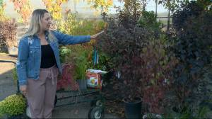 Fall lawn and garden tips from Dutch Growers