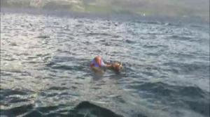 Deer rescue in Okangan Lake