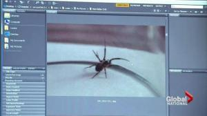 Outbreak of poisonous spiders in England