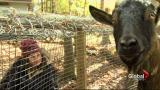 The Good File: Sanctuary From Harm
