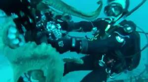 Giant Octopus tries to make off with scuba diver's camera
