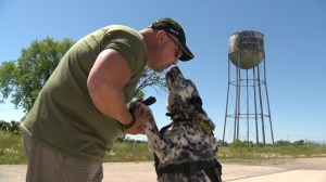 Man's best friend help veterans recover