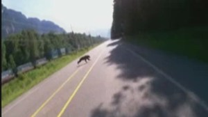 Raw: Motorcyclist collides with bear