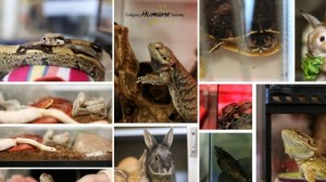Calgary Humane Society seizes animals, many exotic