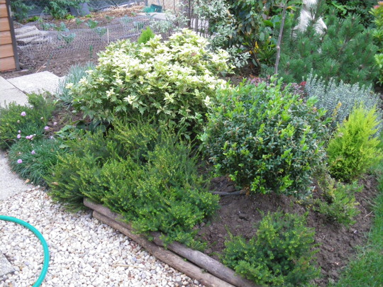 heather & evergreen shrub border
