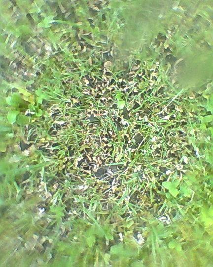 Should I Rake My Lawn Spring