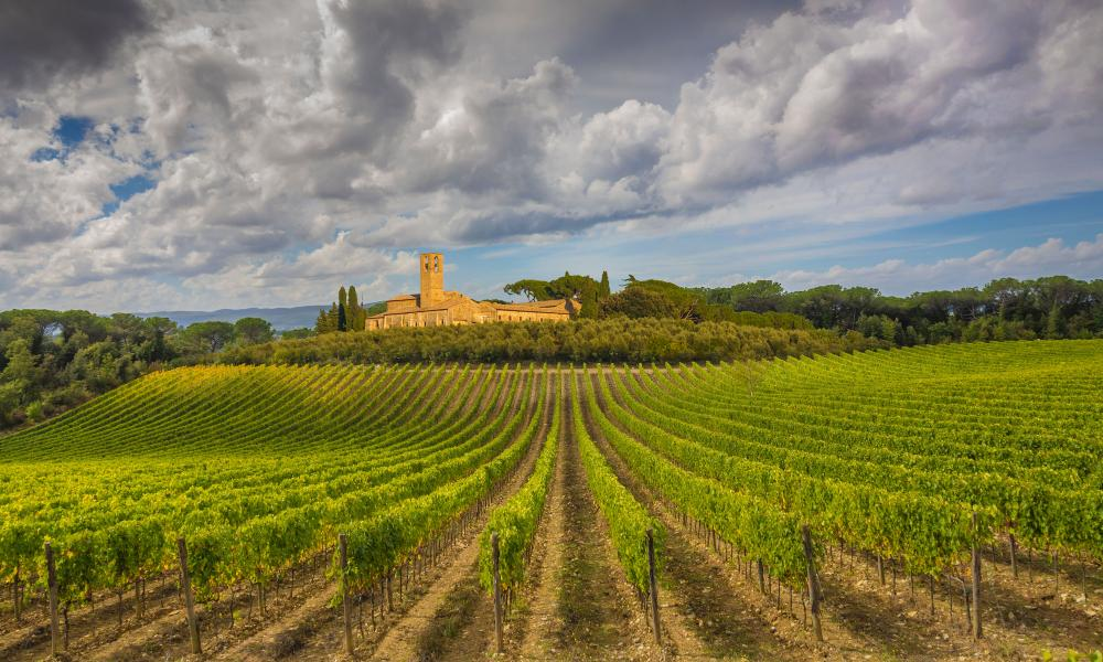 Rising temperatures are increasing the amount sugar in Italy's wines