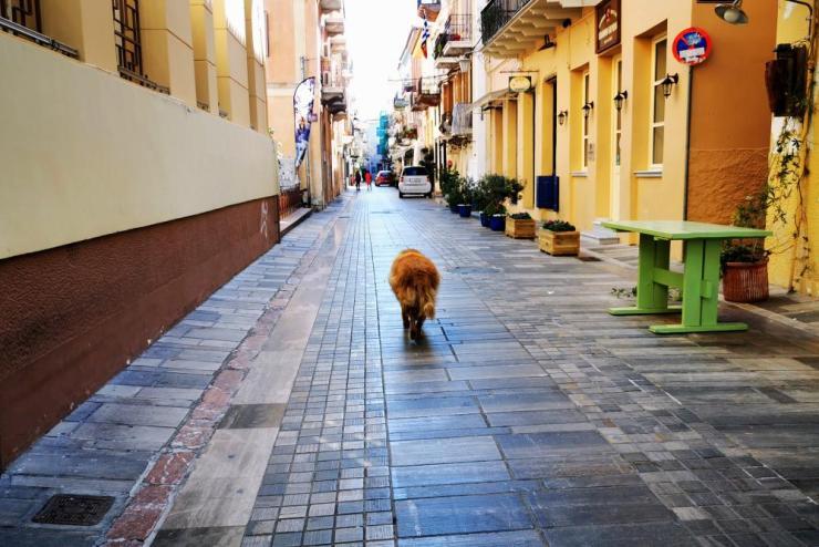 A dog walks along an empty street in Nafplio, Greece, on Wednesday