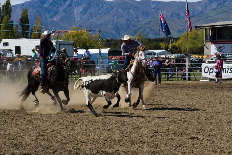 Steer roping at Wanaka.