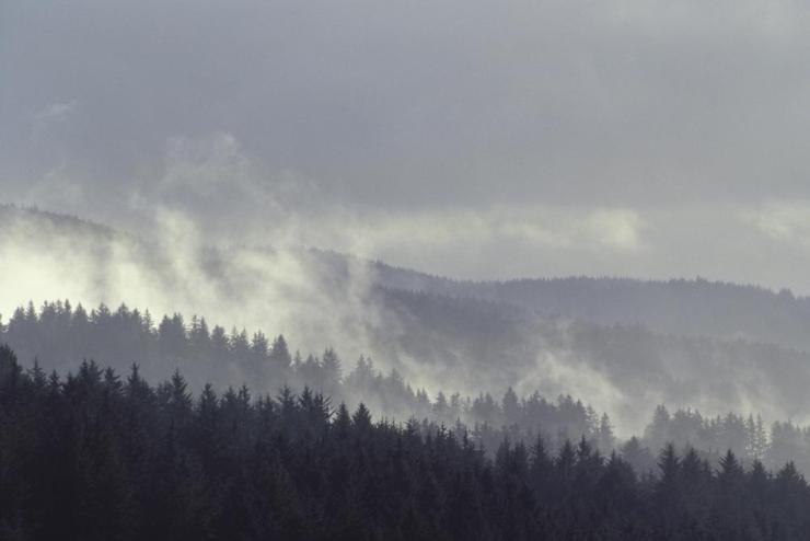 Siuslaw National Forest, in Oregon.