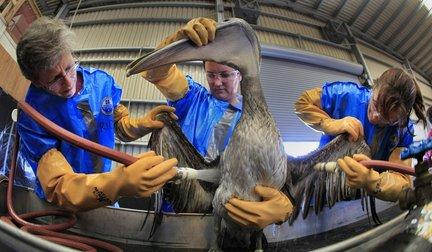 oil birds.JPG