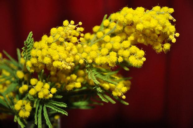 5 ricette per un men in giallo per la Festa delle Donne