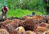 جنبههای زیستمحیطی تولید روغن نخل (Palm)