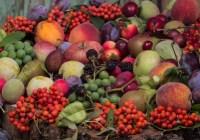 چگونه میتوان تغذیهٔ گیاهی سالم داشت؟ (قسمت ۱)