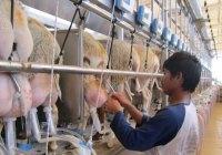 وضعیت حیوانات در دامداریهای صنعتی (قسمت ۵) – گوسفندها و بزها